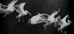 Souther sources the photographs of Jules Marey as inspirations for his work.Photograph of a Flying Pelican, c. 1882, Étienne-Jules Marey (1830-1904), [Public domain], via Wikimedia Commons